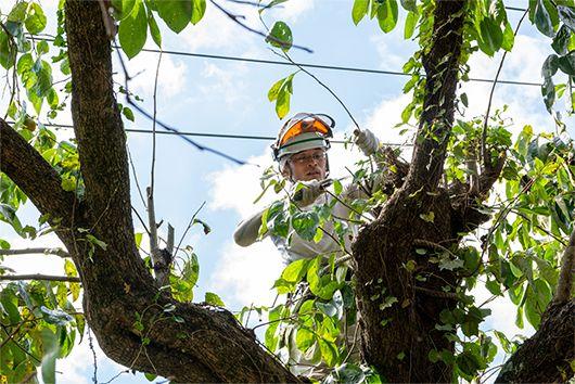危険な木の処理