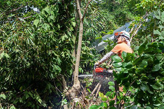 電線の下に生えた木を伐採