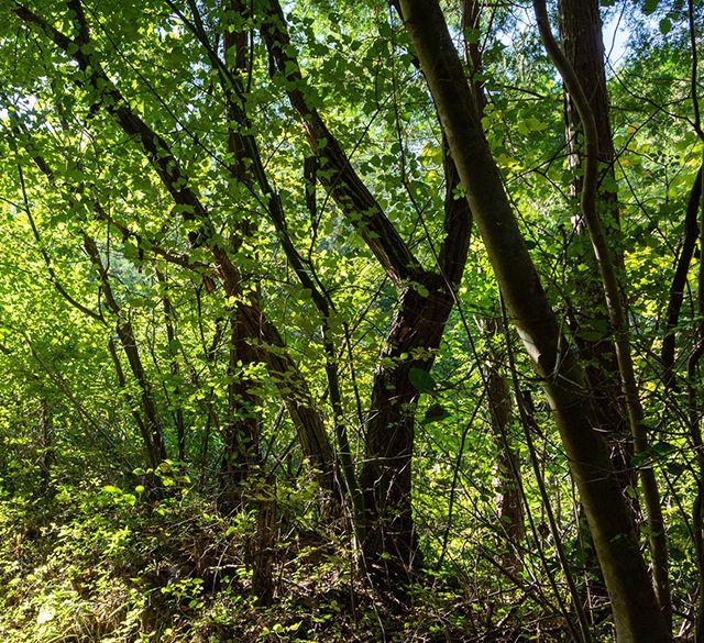 邪魔な木の伐採業務